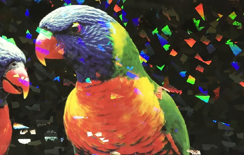 holographic parrot